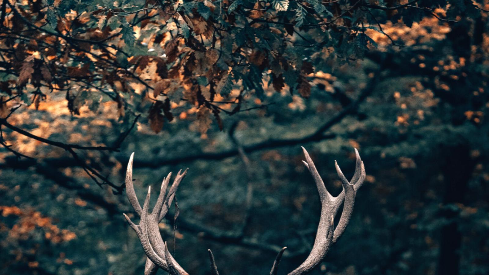 Wildweekend